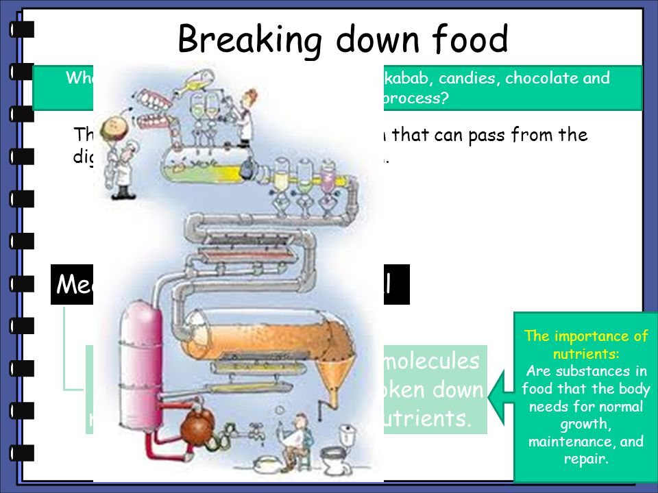 Breaking down food Mechanical Chemical