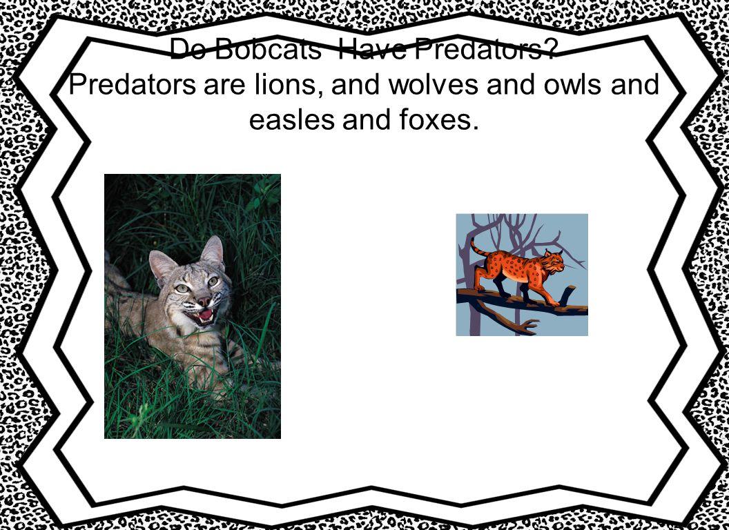 Do Bobcats Have Predators