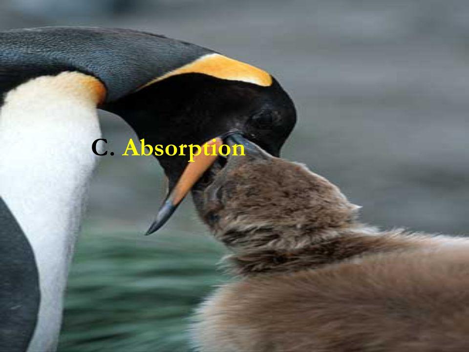 C. Absorption