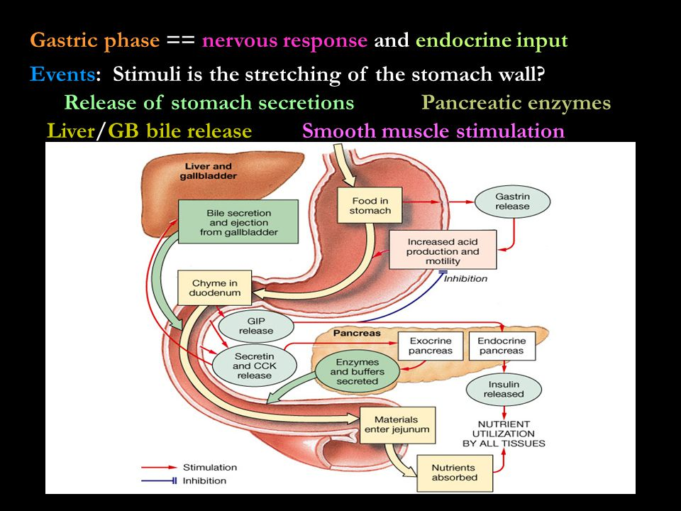 Gastric phase == nervous response and endocrine input