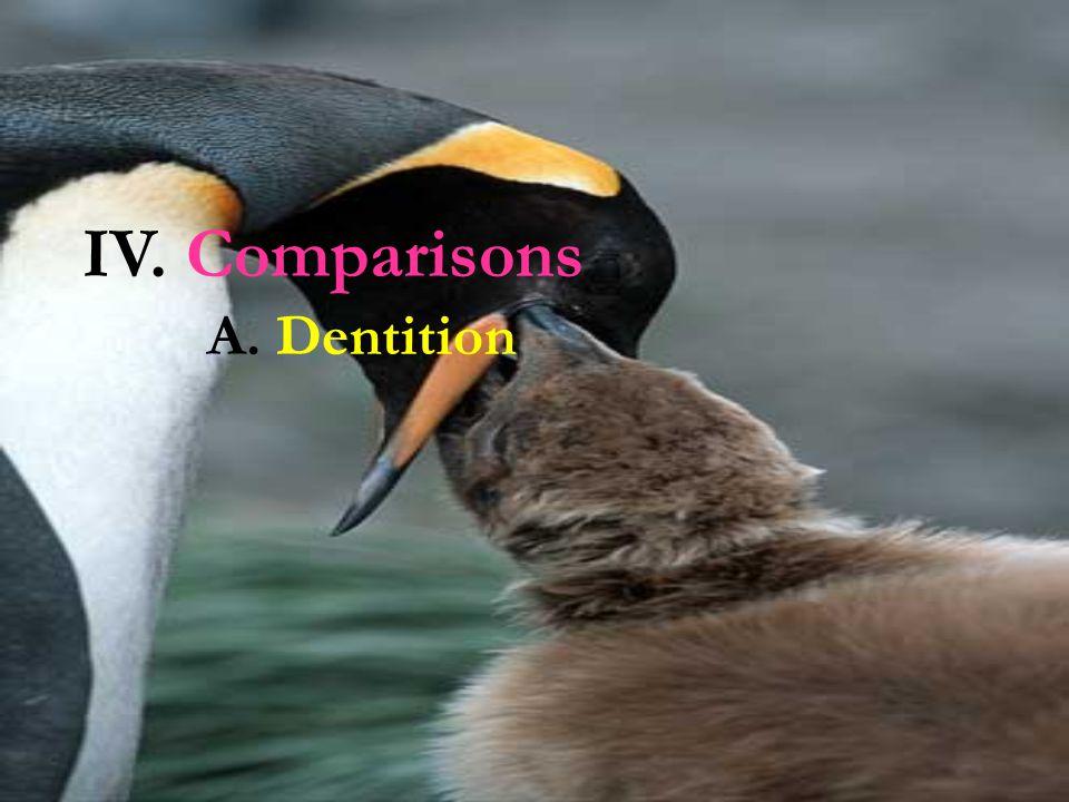 IV. Comparisons A. Dentition