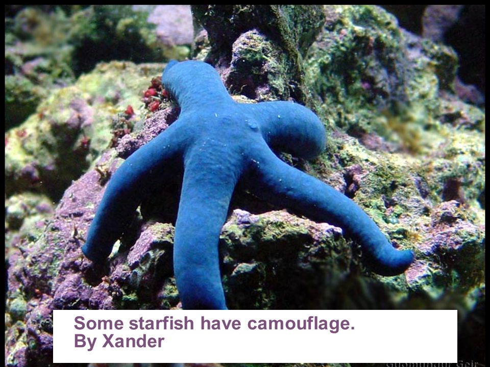 Some starfish have camouflage.