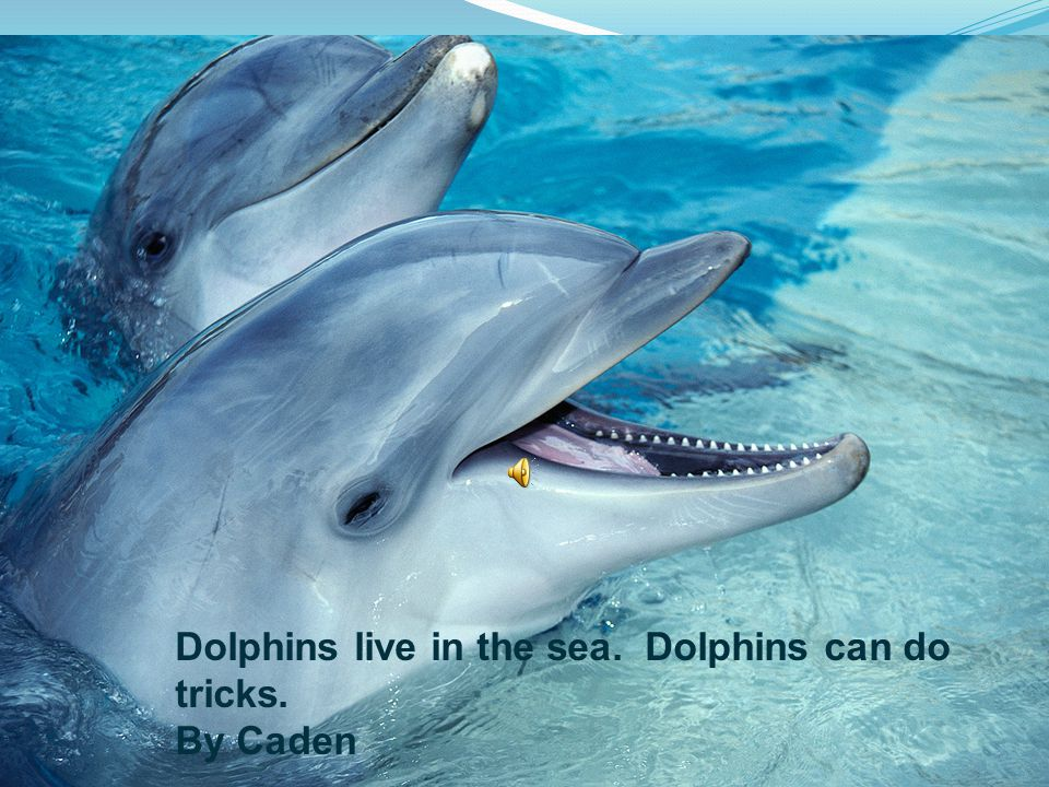 Dolphins live in the sea. Dolphins can do tricks. By Caden