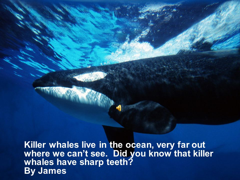 Killer whales live in the ocean, very far out where we can't see