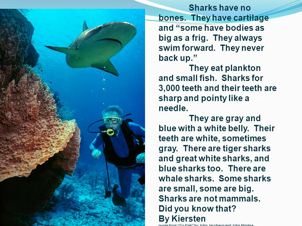 Sharks have no bones. They have cartilage and some have bodies as big as a frig.