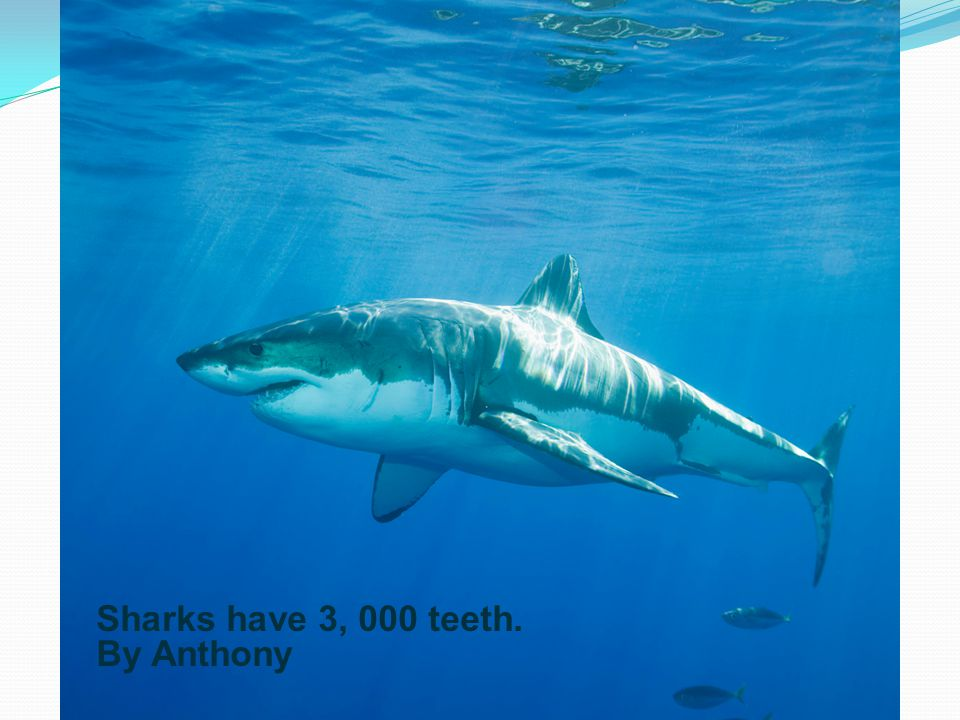 Sharks have 3, 000 teeth. By Anthony