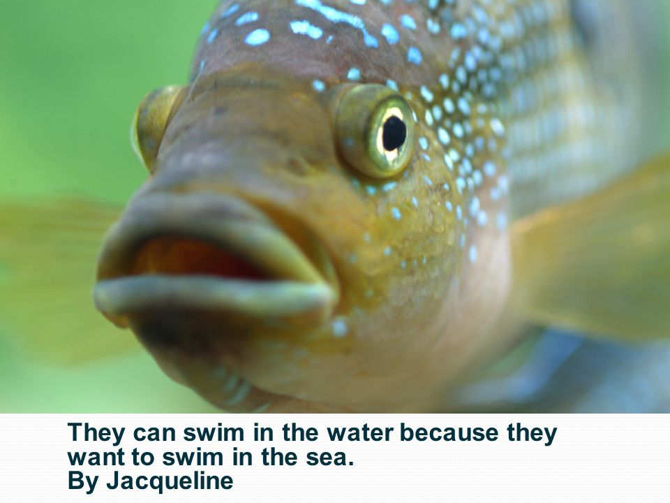 They can swim in the water because they want to swim in the sea.