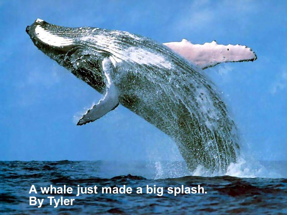 A whale just made a big splash.