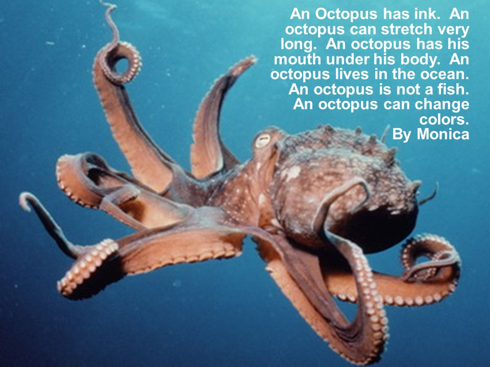 An Octopus has ink. An octopus can stretch very long