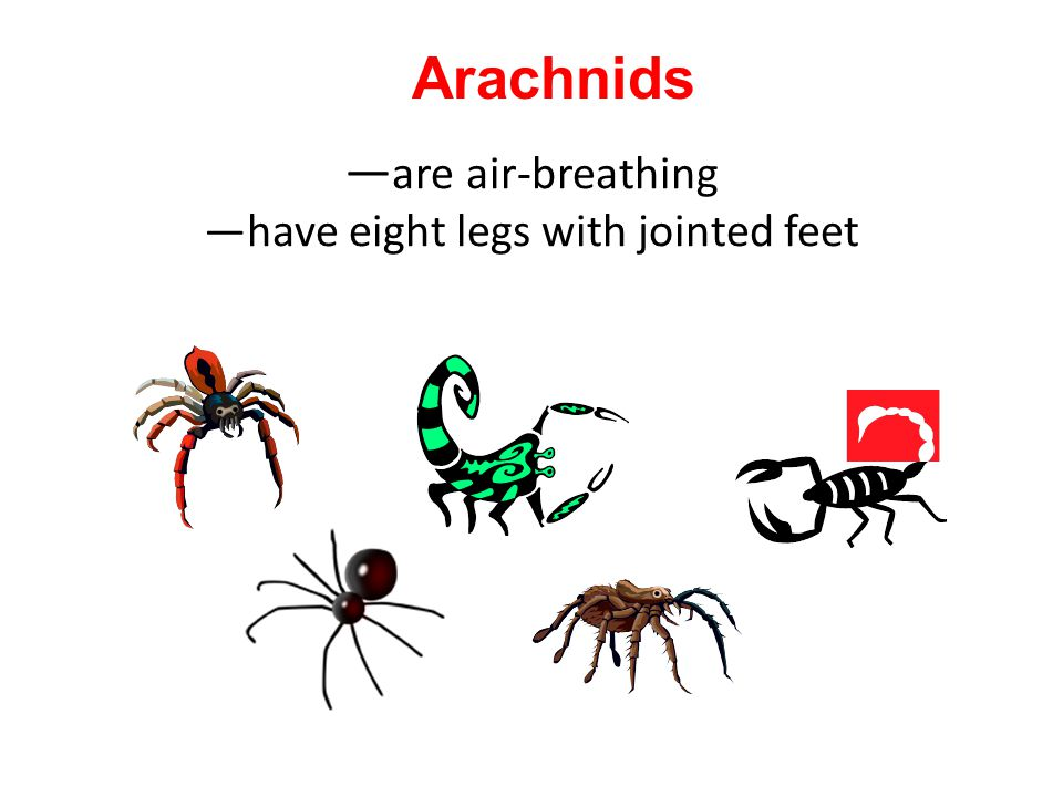 —are air-breathing —have eight legs with jointed feet