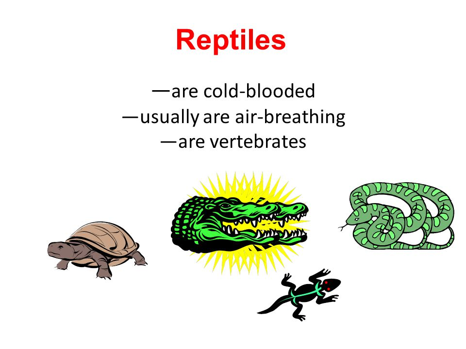—are cold-blooded —usually are air-breathing —are vertebrates
