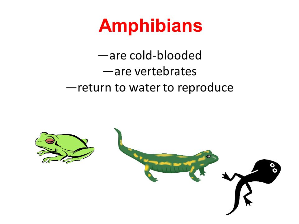 —are cold-blooded —are vertebrates —return to water to reproduce