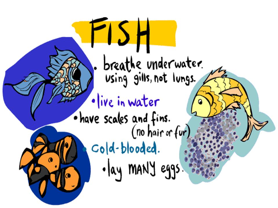 Fish – Basic Facts
