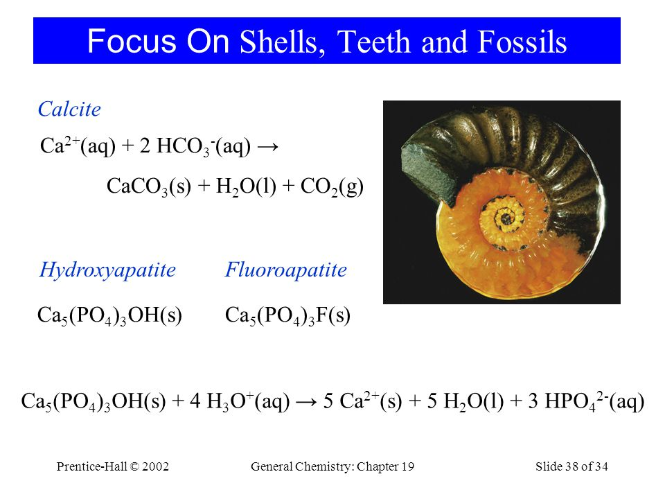 Focus On Shells, Teeth and Fossils