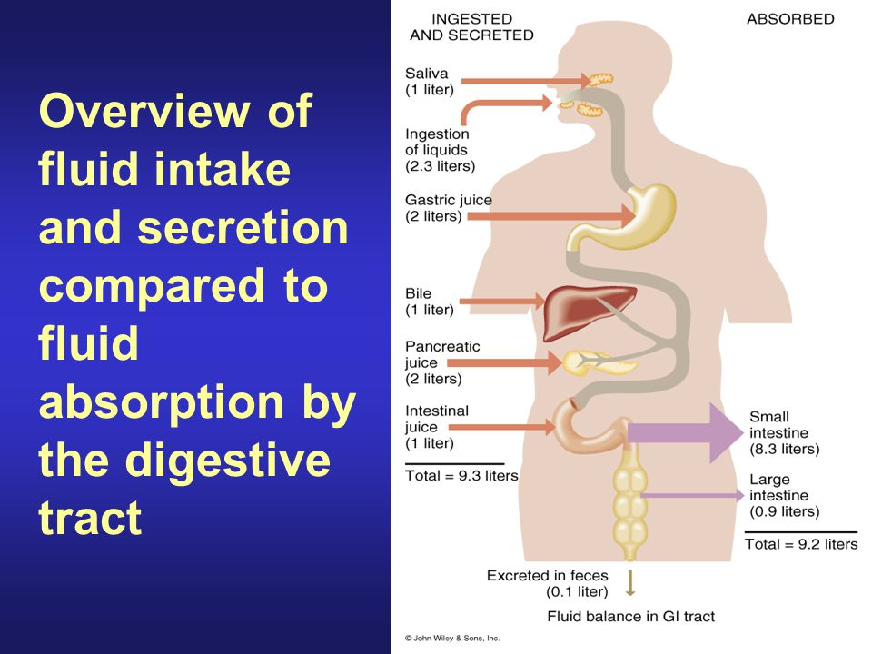 Overview of fluid intake and secretion compared to fluid absorption by the digestive tract