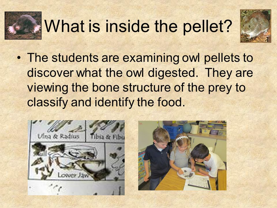 What is inside the pellet