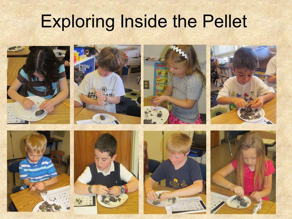Exploring Inside the Pellet
