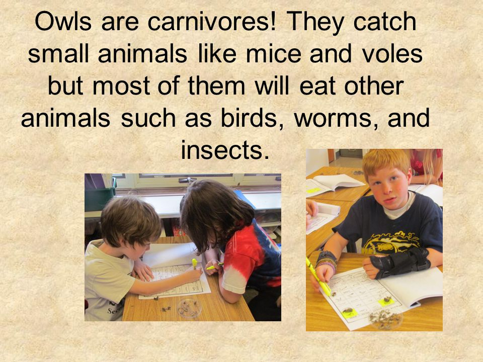 Owls are carnivores.