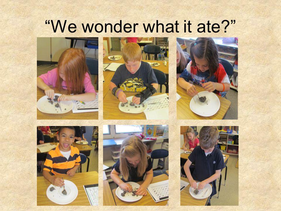 We wonder what it ate