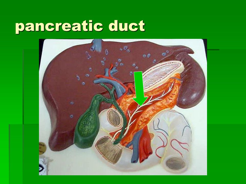pancreatic duct