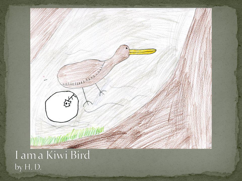 I am a Kiwi Bird by H. D.