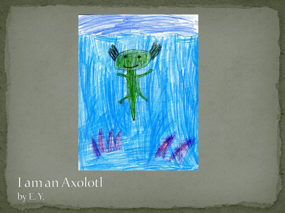 I am an Axolotl by E. Y.