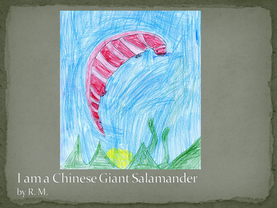 I am a Chinese Giant Salamander by R. M.