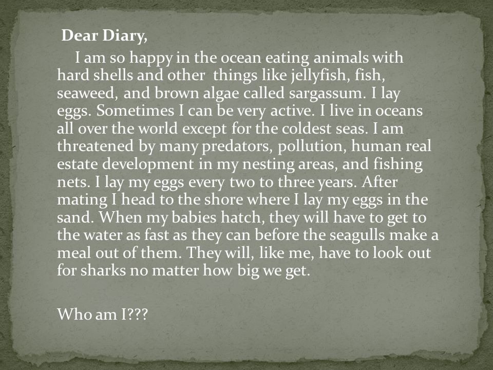 Dear Diary, I am so happy in the ocean eating animals with hard shells and other things like jellyfish, fish, seaweed, and brown algae called sargassum.