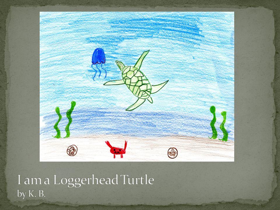 I am a Loggerhead Turtle by K. B.