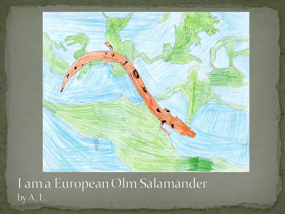 I am a European Olm Salamander by A. L.
