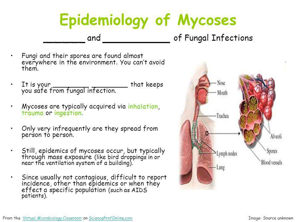 Epidemiology of Mycoses _____ and ________ of Fungal Infections