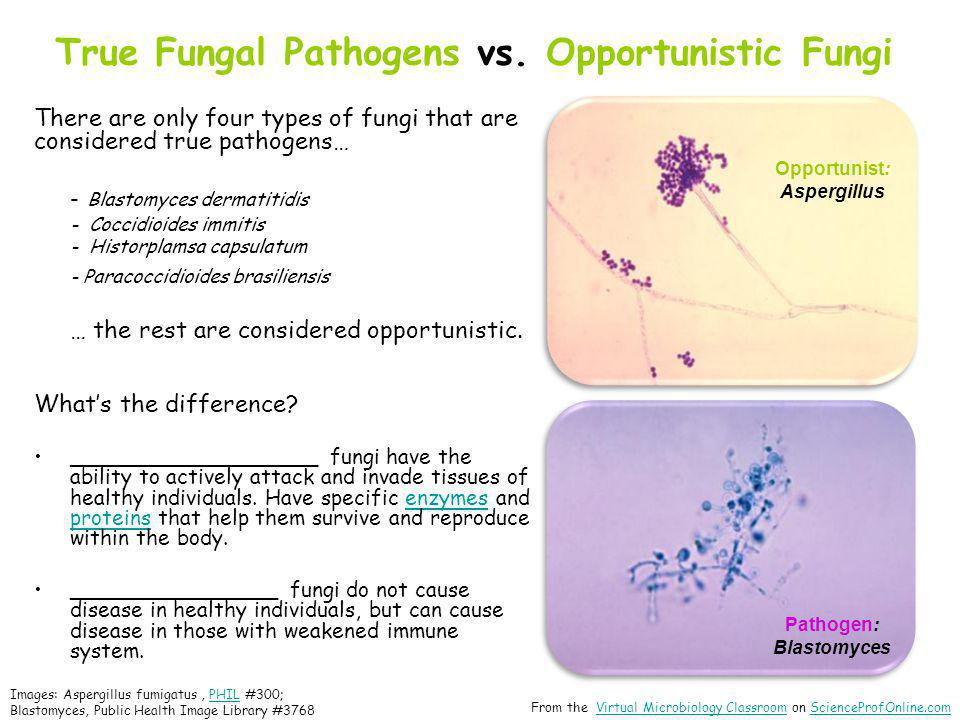 True Fungal Pathogens vs. Opportunistic Fungi