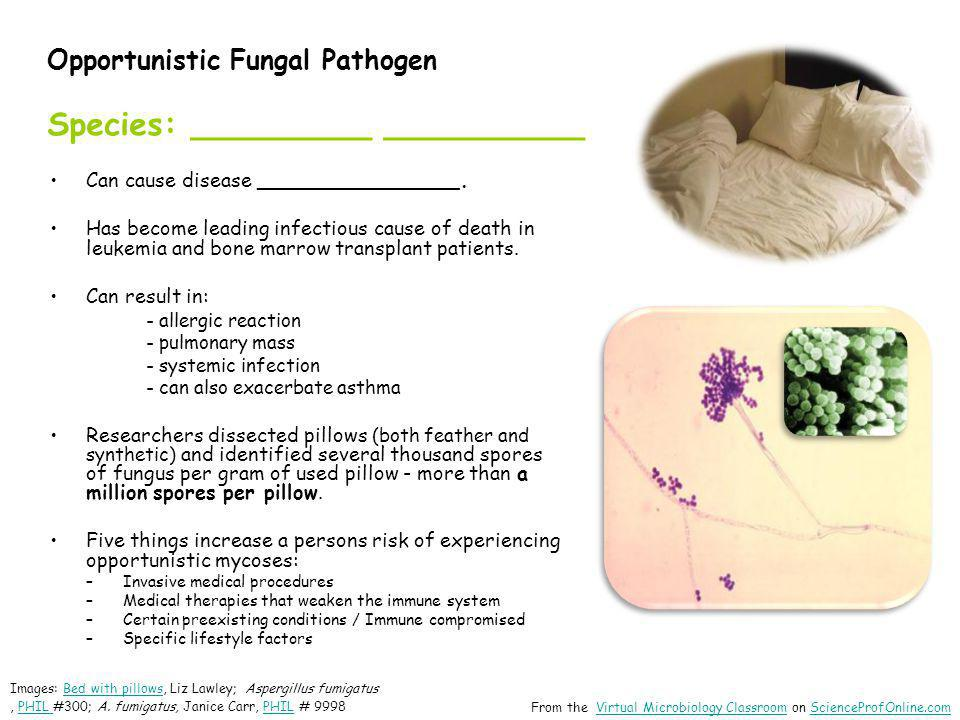 Opportunistic Fungal Pathogen Species: _________ __________