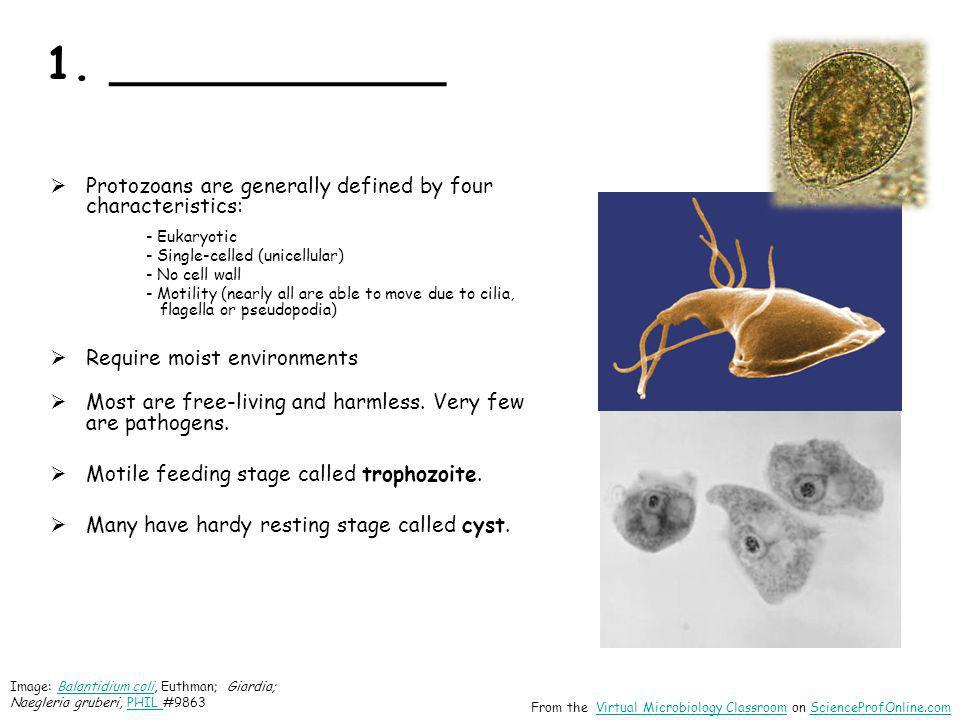 1. ____________ Protozoans are generally defined by four characteristics: - Eukaryotic. - Single-celled (unicellular)