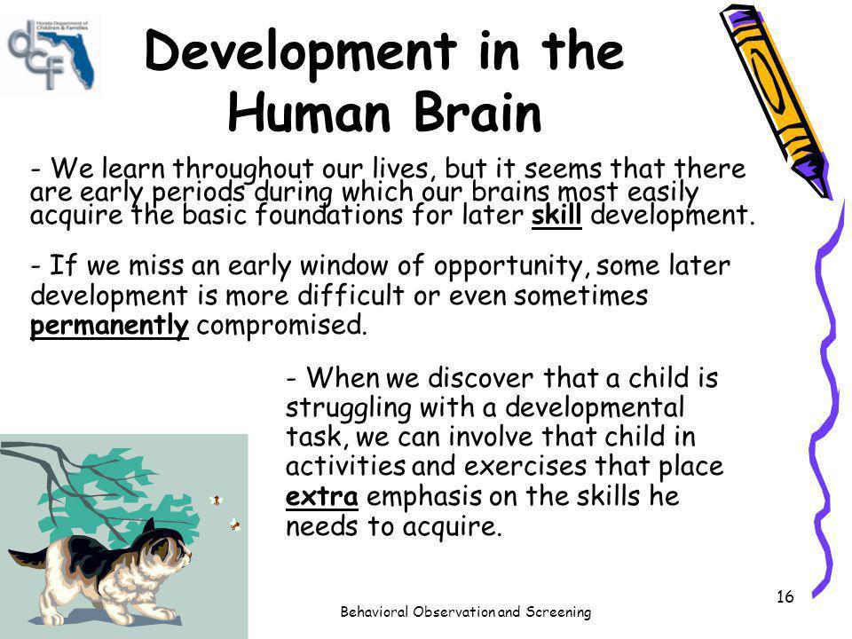 Development in the Human Brain
