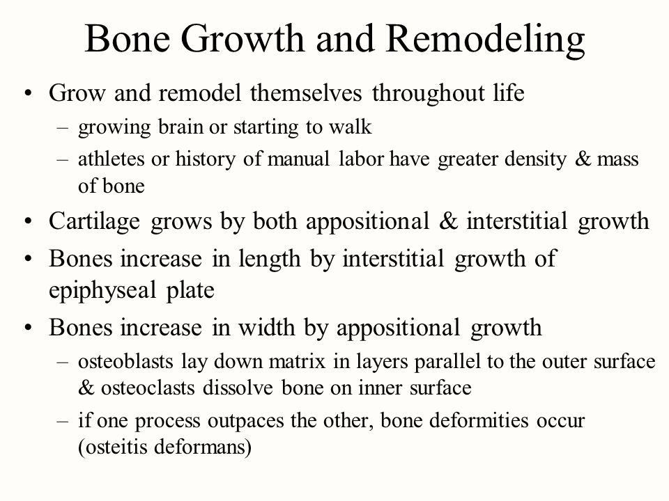 Bone Growth and Remodeling