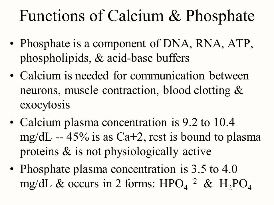 Functions of Calcium & Phosphate