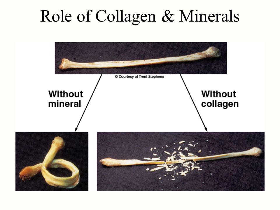 Role of Collagen & Minerals