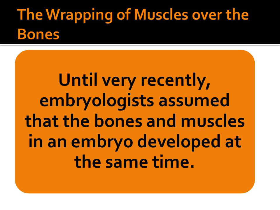 The Wrapping of Muscles over the Bones