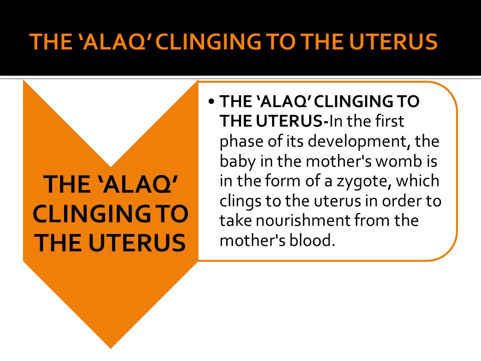 THE 'ALAQ' CLINGING TO THE UTERUS