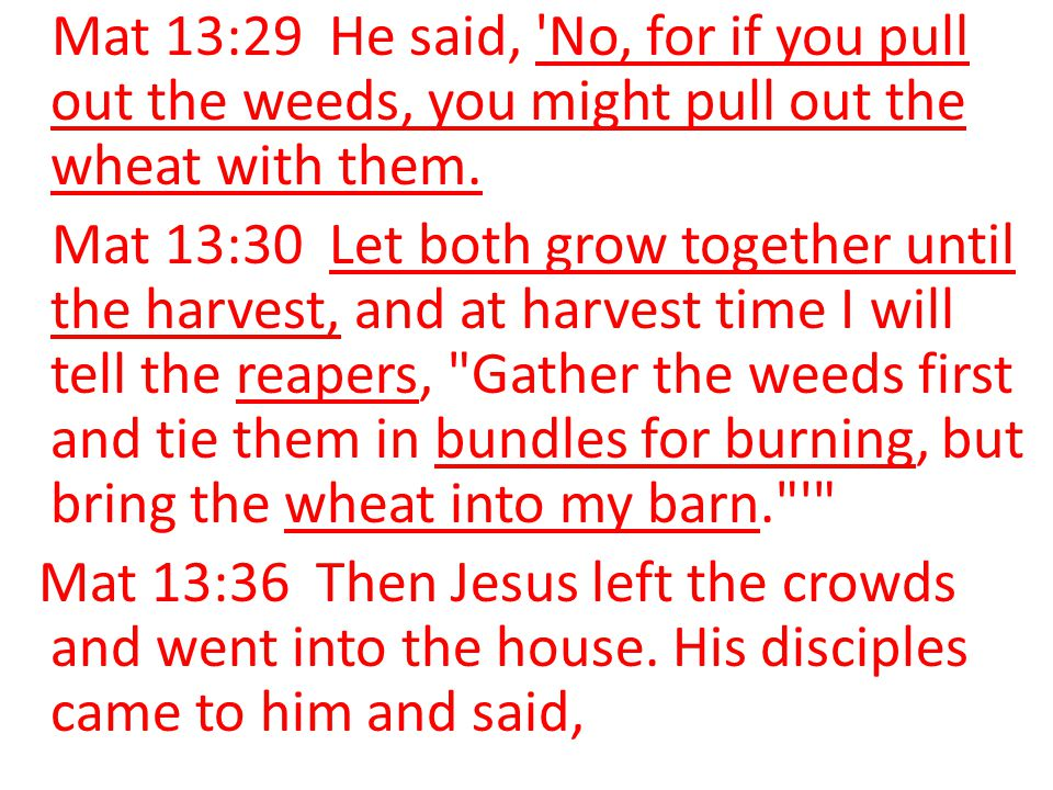 Mat 13:29 He said, No, for if you pull out the weeds, you might pull out the wheat with them.