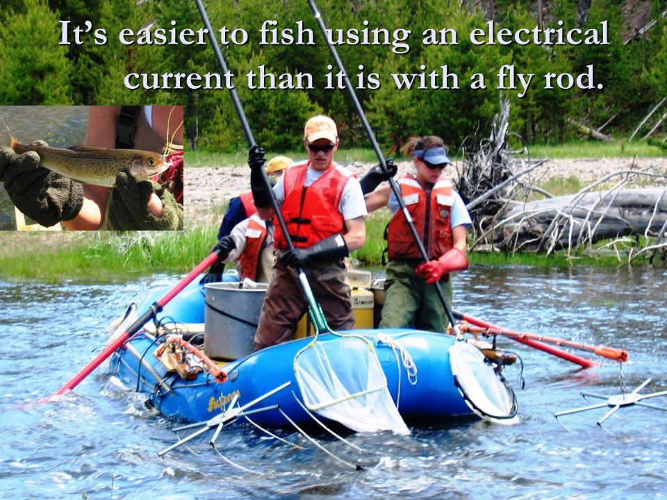 It's easier to fish using an electrical current than it is with a fly rod.