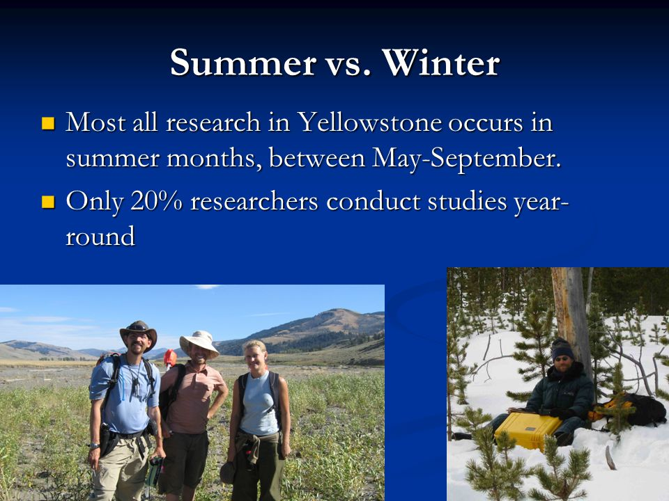 Summer vs. Winter Most all research in Yellowstone occurs in summer months, between May-September. Only 20% researchers conduct studies year-round.