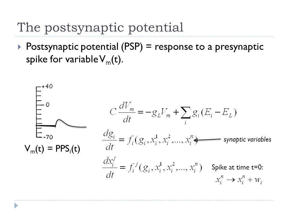 The postsynaptic potential