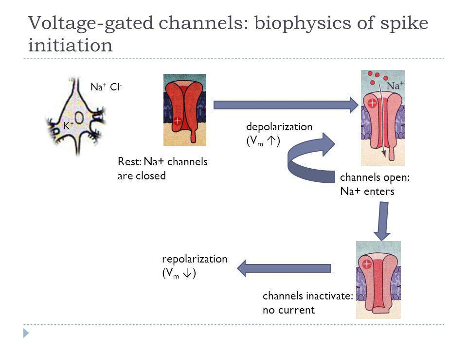 Voltage-gated channels: biophysics of spike initiation