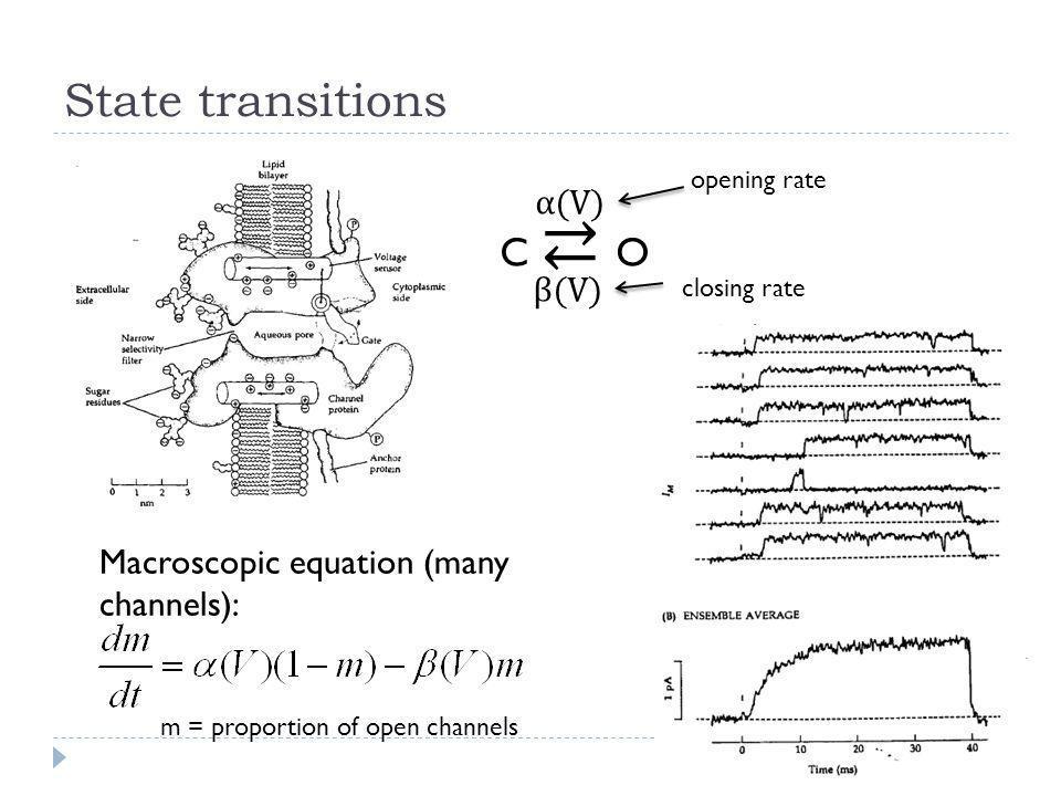 State transitions C ⇄ O α(V) β(V)