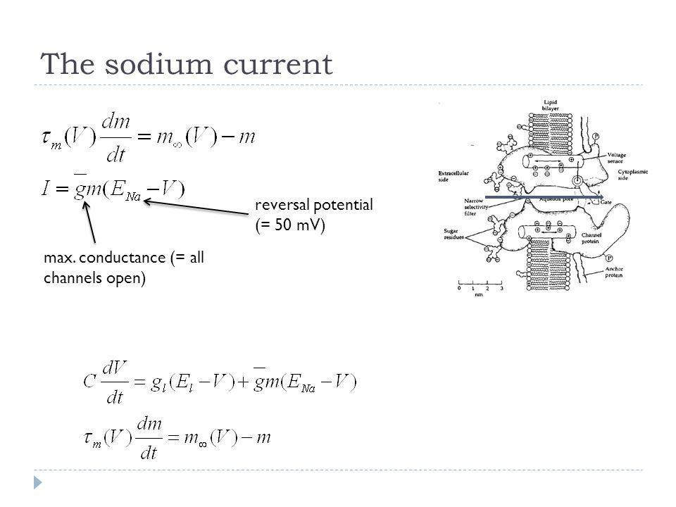 The sodium current reversal potential (= 50 mV)
