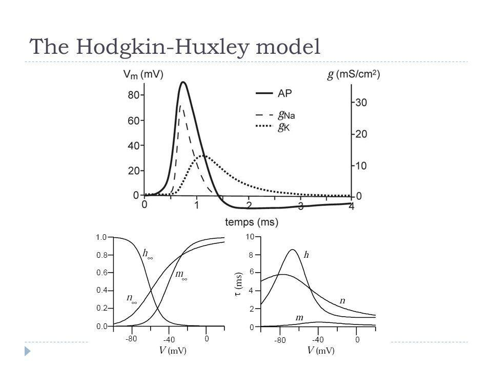 The Hodgkin-Huxley model