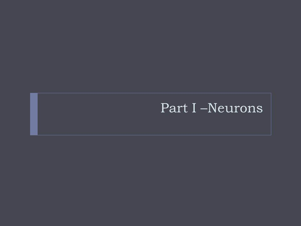 Part I –Neurons