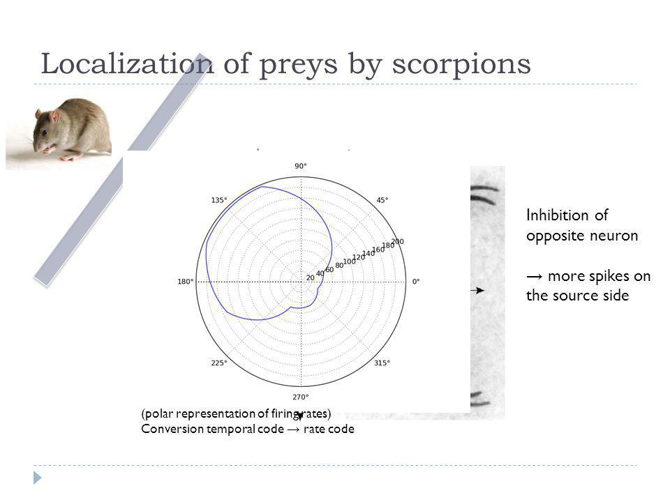 Localization of preys by scorpions